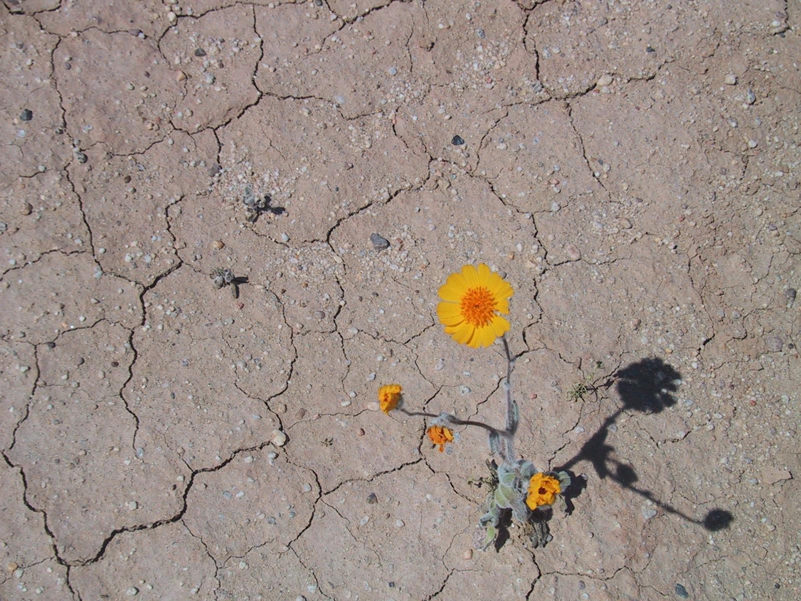 desert flower Desert flower is a 2009 german biographical film directed by sherry hormann it stars liya kebede, sally hawkins and craig parkinson.